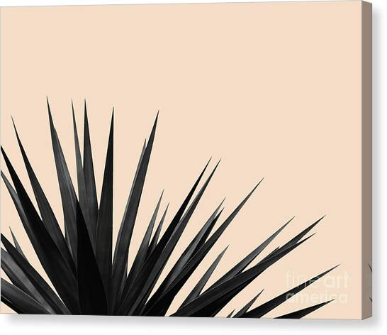 Black Palms On Pale Pink Canvas Print