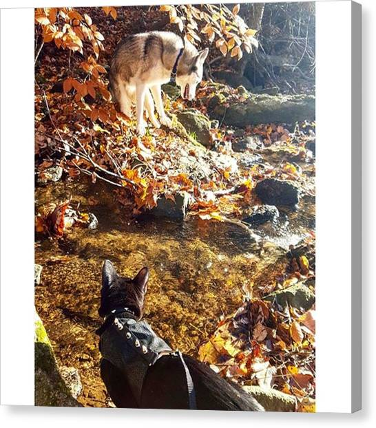 Panthers Canvas Print - Black Panther Meets Wolf ​#cat by Sirius Black Adventure Cat
