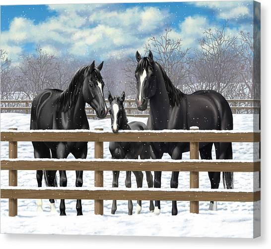 Black Stallion Canvas Print - Black Quarter Horses In Snow by Crista Forest