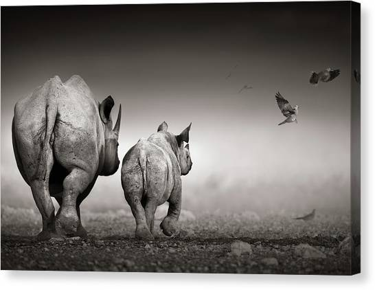 Rhinos Canvas Print - Black Rhino Cow With Calf  by Johan Swanepoel