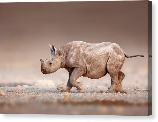 Small Mammals Canvas Print - Black Rhinoceros Baby Running by Johan Swanepoel