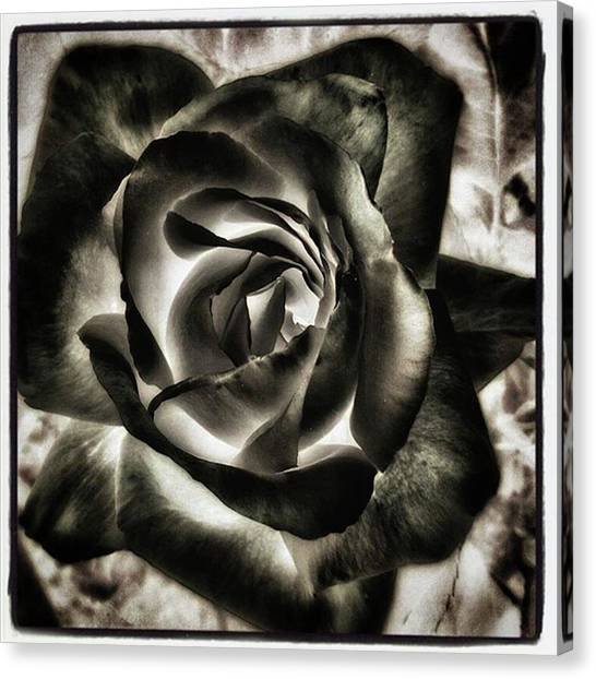 Canvas Print featuring the photograph Black Rose. Symbol Of Farewells by Mr Photojimsf