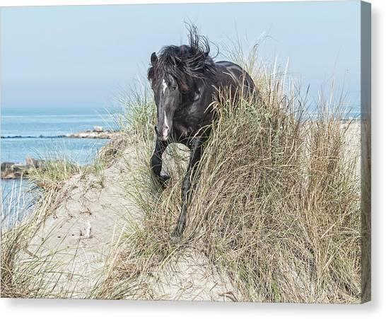Black Stallion Canvas Print - Black Stallion #2 by Wade Aiken