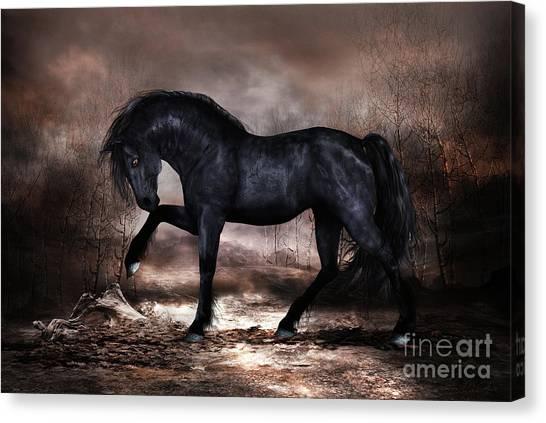 Black Stallion Canvas Print - Black Stallion by Shanina Conway