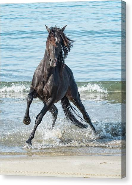 Black Stallion Canvas Print - Black Stallion by Wade Aiken