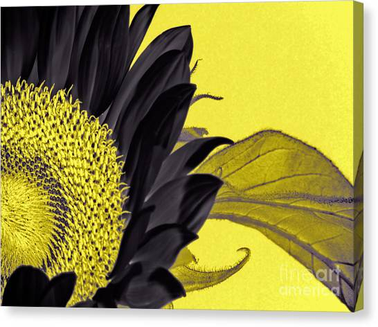 Black Sunflower Canvas Print
