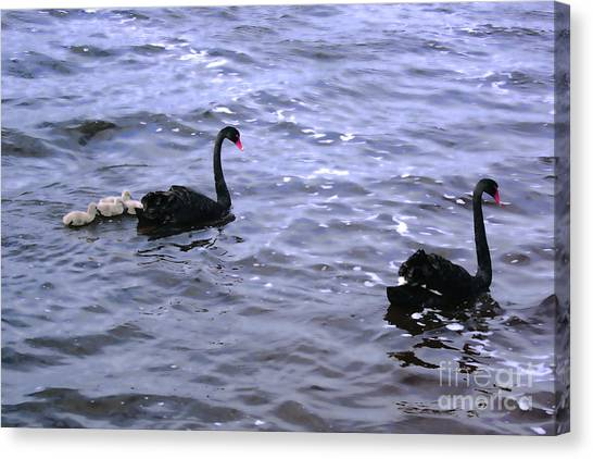 Black Swan Family Canvas Print