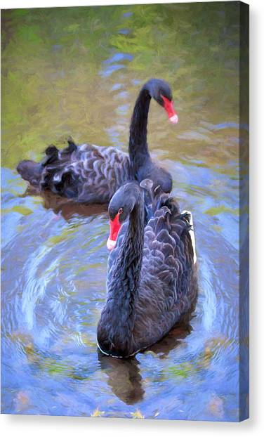 Black Swans Canvas Print