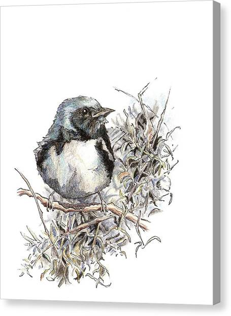 Black-throated Blue Warbler Canvas Print