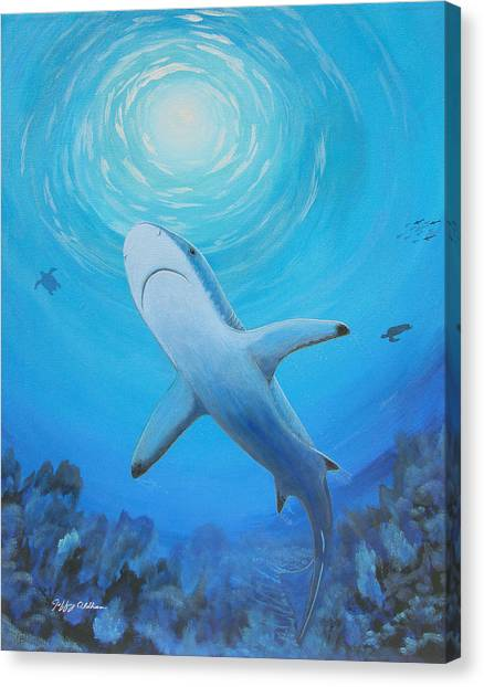 Black Tip Sharks Canvas Print - Black Tip Reef Shark by Jeffrey Oldham