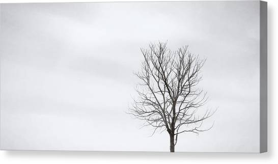 Impression Canvas Print - Black Tree White Sky by Scott Norris