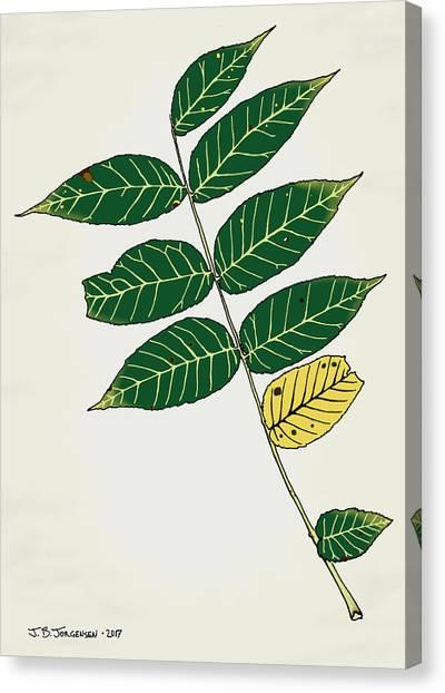 Black Walnut Leaf Illustration Canvas Print by Jamie Jorgensen