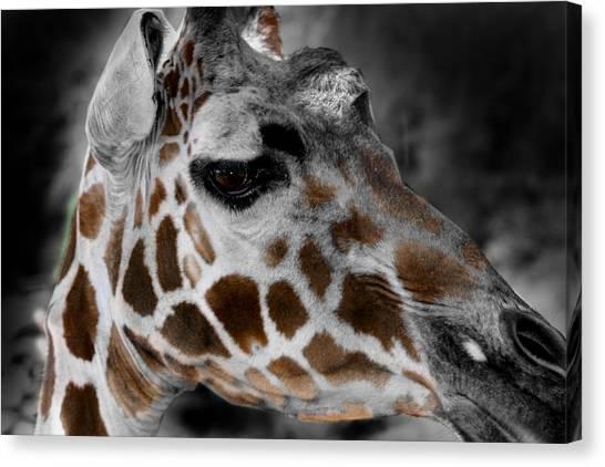 Black  White And Color Giraffe Canvas Print
