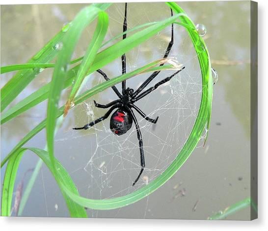 Black Widow Canvas Print - Black Widow Wheel by Al Powell Photography USA