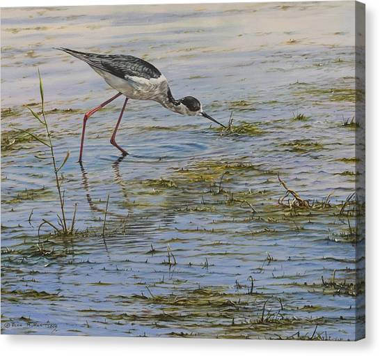 Canvas Print featuring the painting Black Winged Stilt by Alan M Hunt