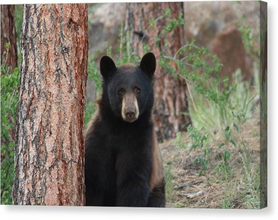 Blackbear2 Canvas Print