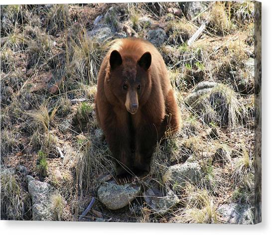 Blackbear4 Canvas Print