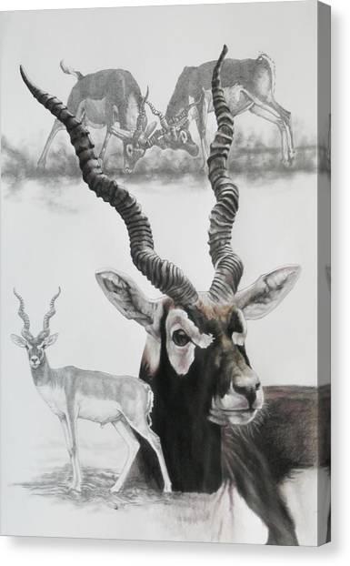 Canvas Print - Blackbuck by Barbara Keith