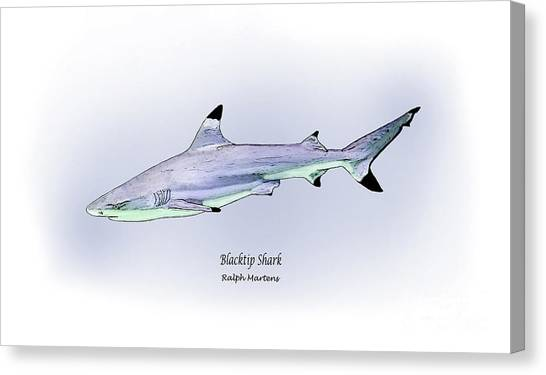 Black Tip Sharks Canvas Print - Blacktip Shark by Ralph Martens