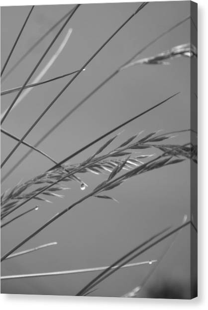 Blades Of Gray Canvas Print