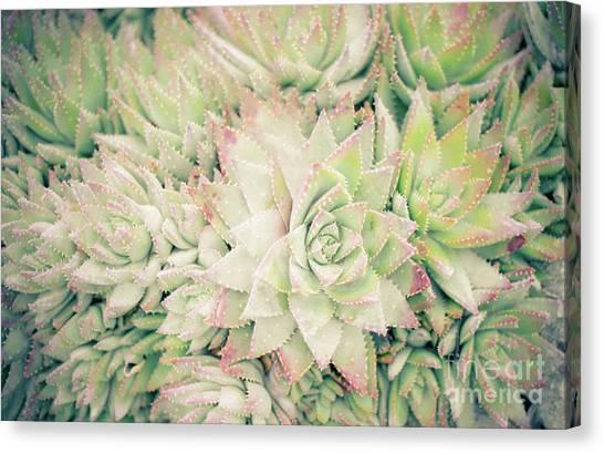 Blanket Of Succulents Canvas Print
