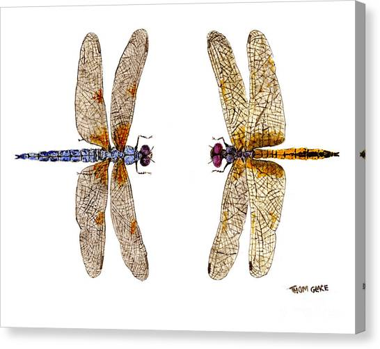 Bleached Skimmer And Hyacinth Glider Canvas Print