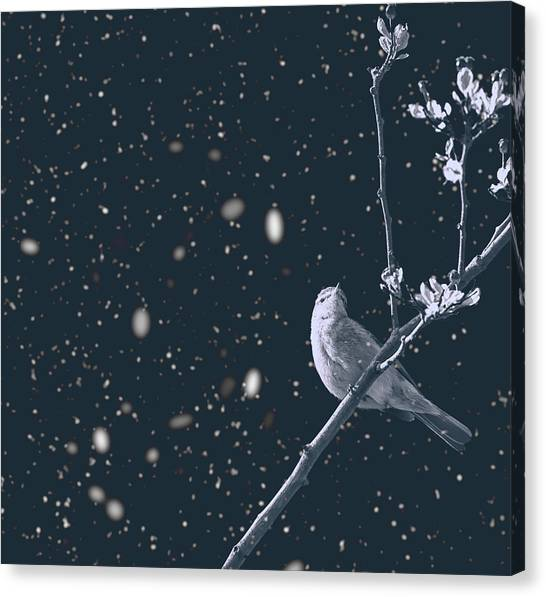 Titmice Canvas Print - Bleak Winter by Martin Newman