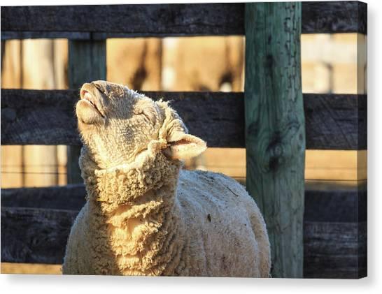 Bleating Sheep Canvas Print