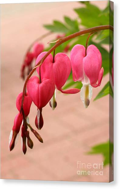 Bleeding Hearts In The Park Canvas Print by Steve Augustin