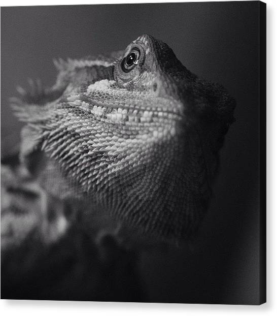Lizards Canvas Print - Blix by Dave Edens