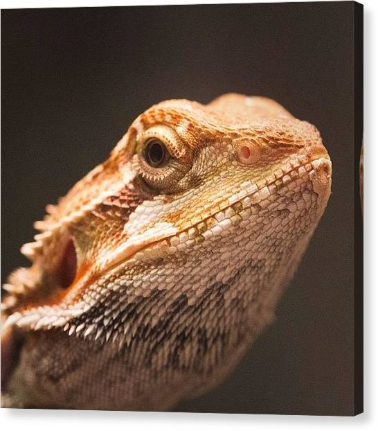 Dragons Canvas Print - Blix Is Dubious by Dave Edens