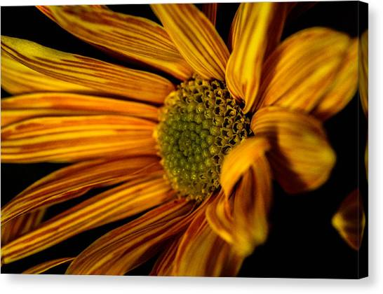 Bloom Bloom Canvas Print