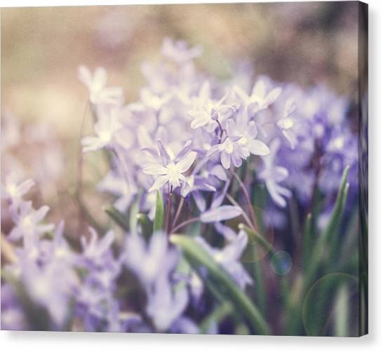Bloom Canvas Print by Lisa Russo