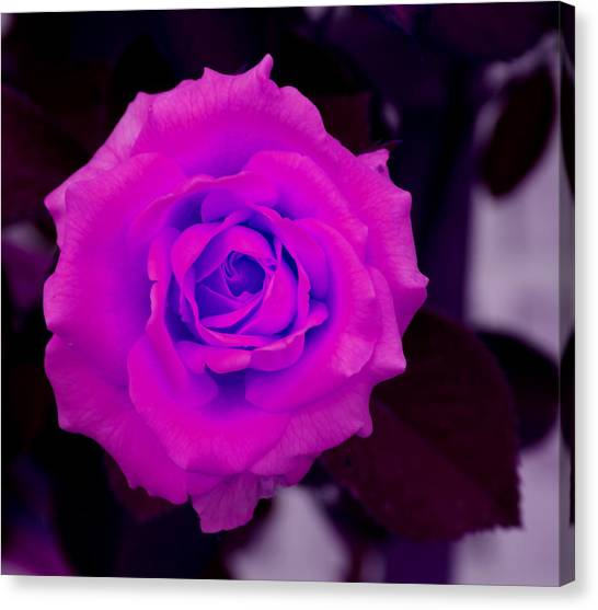 Bloom N Love-abstract Canvas Print by Debbie May