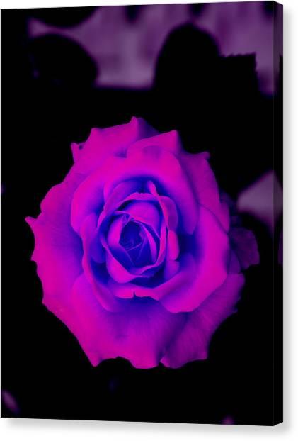 Bloom N Love Canvas Print by Debbie May