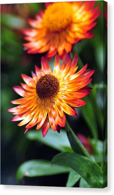 Bloomin' Loverly Canvas Print by J DeVereS