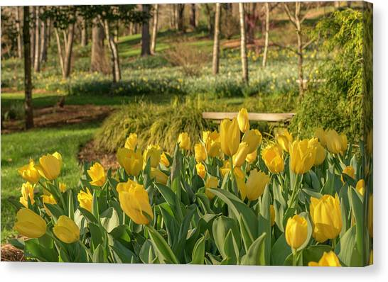 Bloomin Tulips Canvas Print