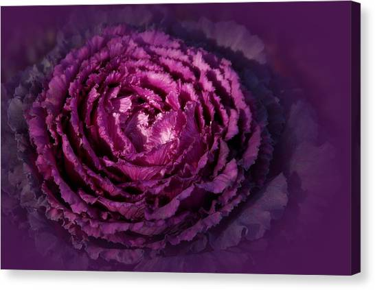 Blooming Cabbage Canvas Print by Angie Tirado
