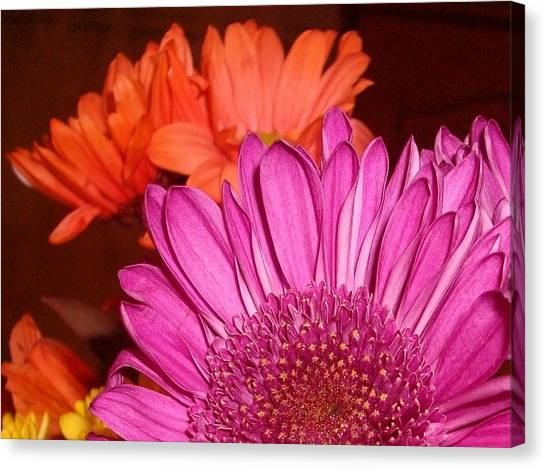Blooming Colors Canvas Print by LDPhotography Stephanie Armstrong
