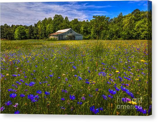 Horse Farms Canvas Print - Blooming Country Meadow by Marvin Spates