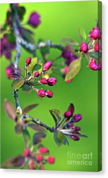 Blooming Spring Poetry Canvas Print