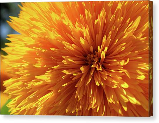 Blooming Sunshine Canvas Print