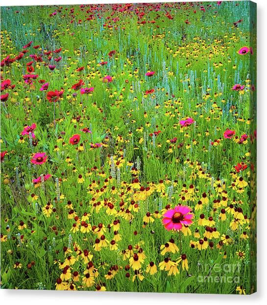 Blooming Wildflowers Canvas Print