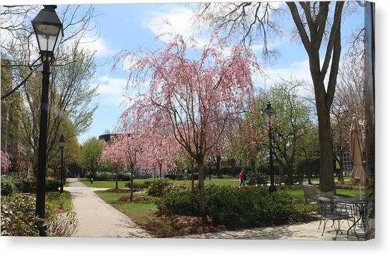 Harvard University Canvas Print - Blossom At Harvard Business School by Qin  Wang
