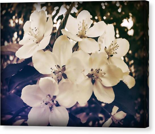 Blossom Canvas Print by JAMART Photography
