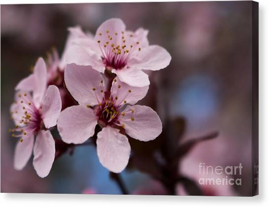 Blossom Trio Canvas Print