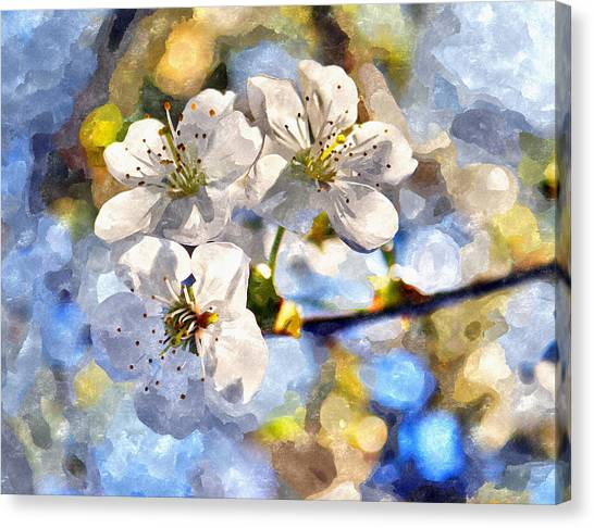Blossoming Cherry And Morning Sunlight Watercolor Canvas Print
