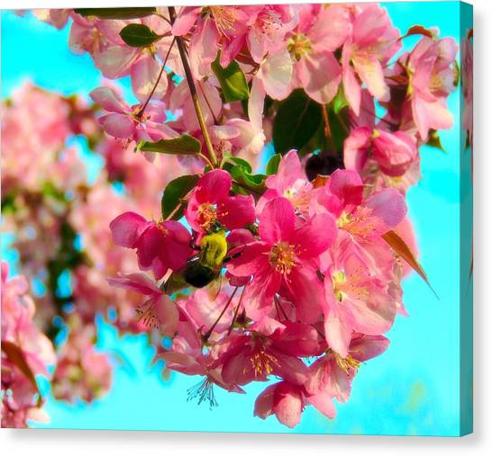 Blossoms And Bees Canvas Print