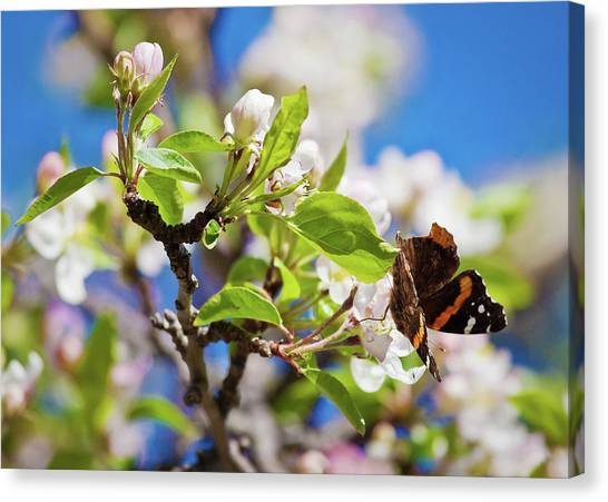 Blossoms And Butterfly Canvas Print