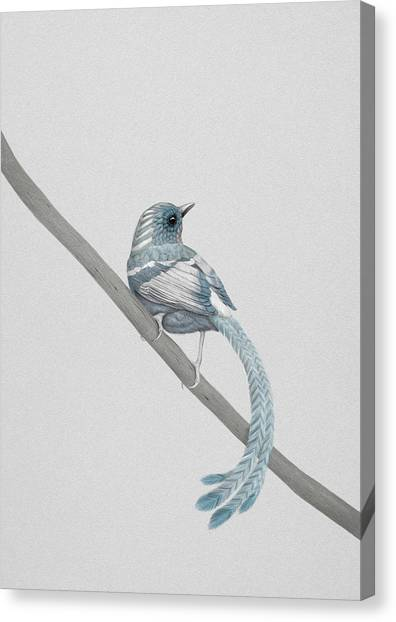 Bird Canvas Print - Blue 2 by Diego Fernandez